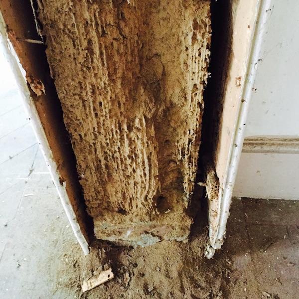 Bensleys Damp And Timber Services